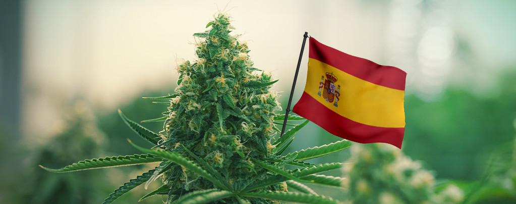 Besten Cannabissorten Spanien