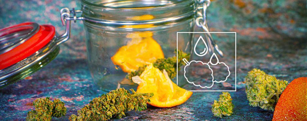 Übertrockenes Marihuana