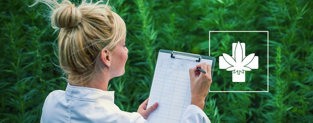 Wie Du Die Richtige Medizinische Sorte Für Dich Auswählst