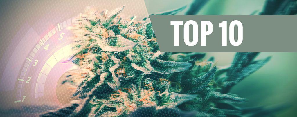 Schnellsten Cannabissorten