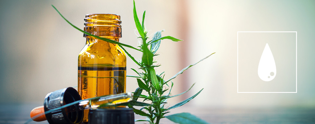 Alles Über Cannabiskonzentrate