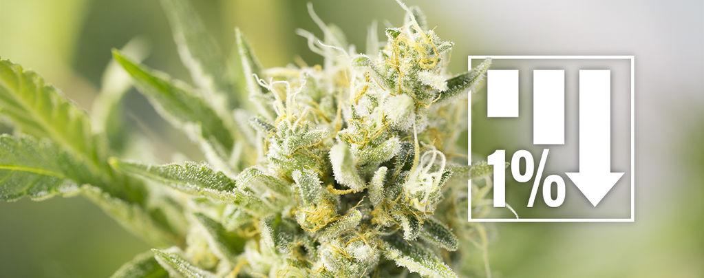 Cannabissorten Unter 1% THC