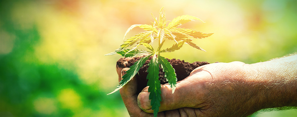 Was Du Vor Dem Anbau Von Cannabis Wissen Solltest