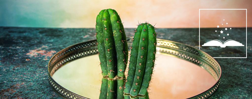 San Pedro (Echinopsis pachanoi)