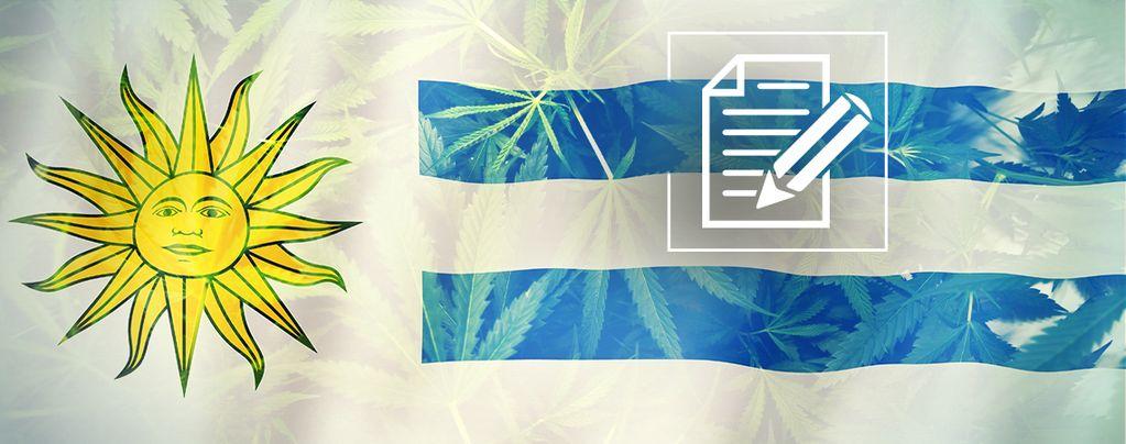 Uruguay: Das Cannabisparadies Versinkt Im Chaos