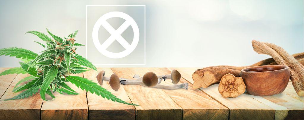 Weed, Pilze Und Ayahuasca Sind Keine Drogen
