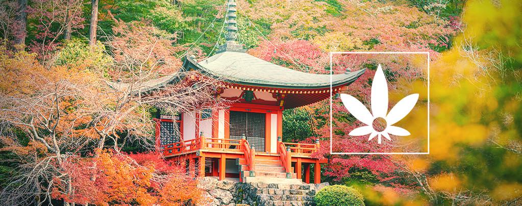 Hokkaido Japan Hemp (ACE Seeds) regulär