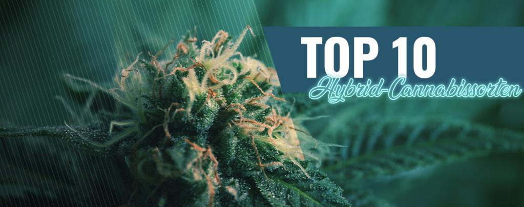 Amsterdams 10 Beste Coffeeshops Hybrid-Cannabis
