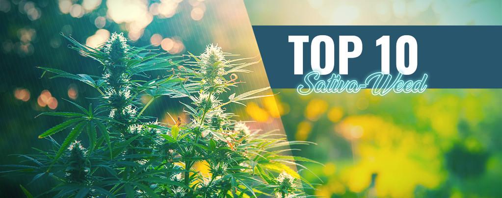 Die Top 10 Des Besten Sativa-Weeds In Amsterdam