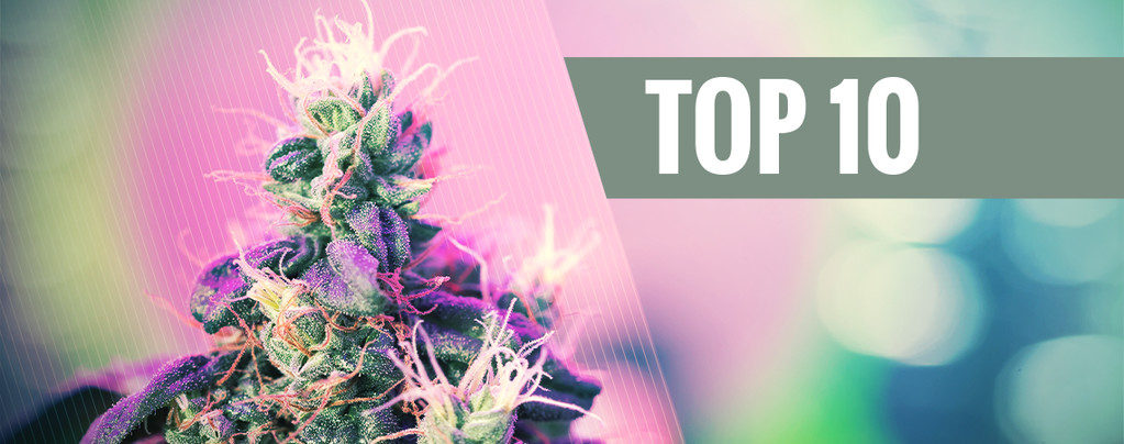 Die 10 Besten Preisgekrönten Cannabissorten