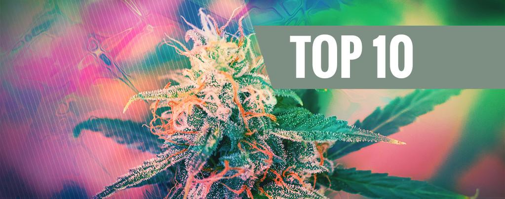 Die Top 10 Der Psychedelischen Cannabissorten