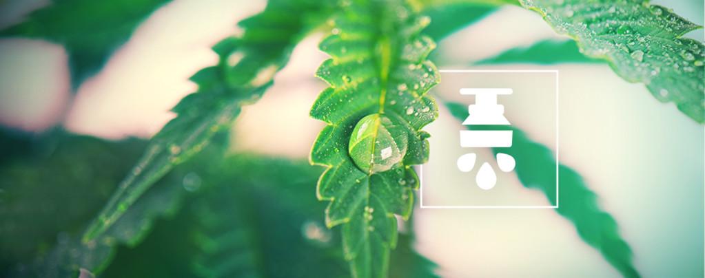 Die Vorteile Eines Bewässerungssystems Für Cannabis
