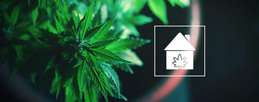 Cannabis Überall Zuhause Anbauen