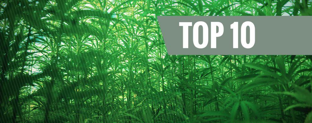 Die 10 Größten Cannabissorten