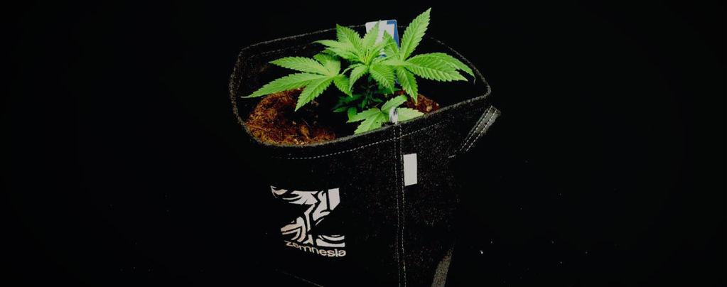 Die Vorteile Von Stofftöpfen Für Den Anbau Von Cannabis