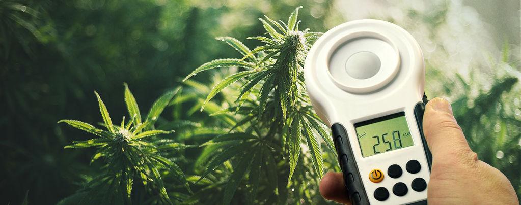 Wie Man Cannabis-Erträge Mithilfe Eines Luxmeters Verbessern Kann