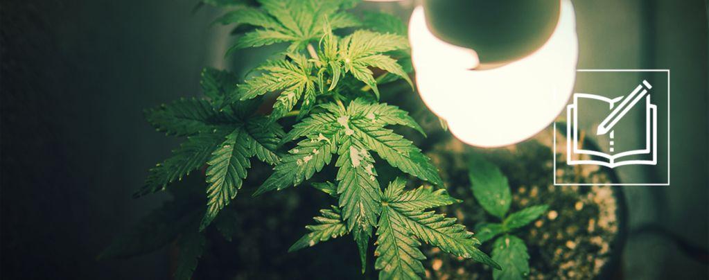 Alles, Was Man Über Den Mikro-Anbau Von Cannabis Wissen Muss