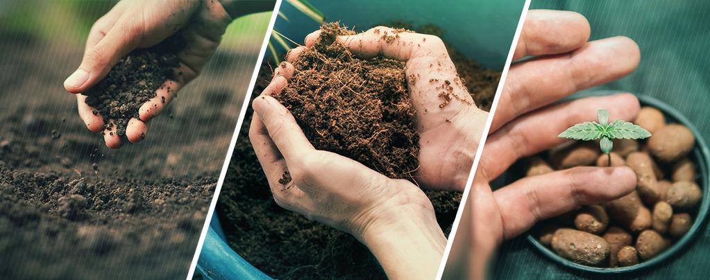 Erde, Kokos Oder Hydrokultur