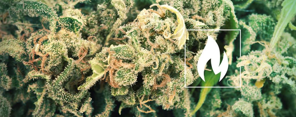 Cannabis Decarboxyliersen