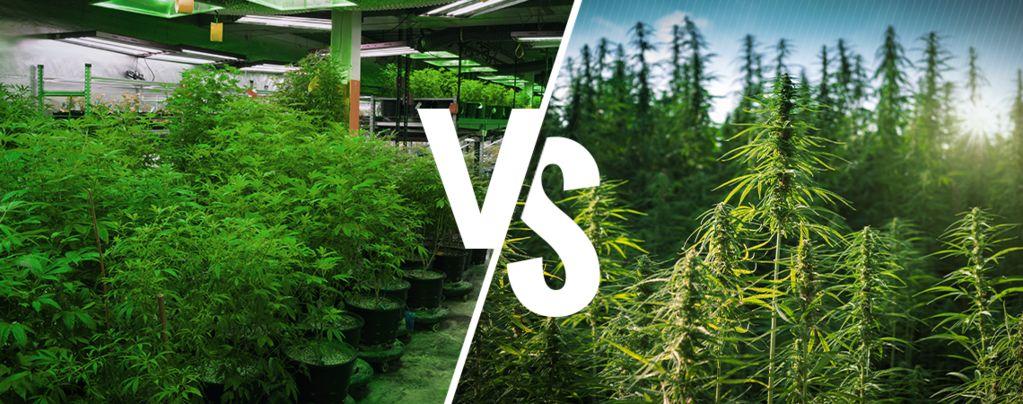 Im Grow Room vs Im Freien Cannabis