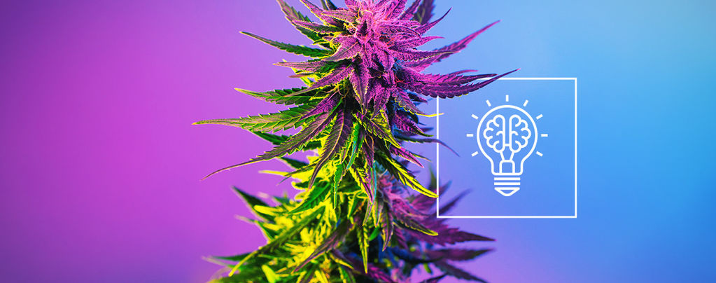 Macht Cannabis Dich Kreativer?
