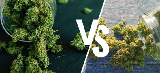 Im Freien Im Vergleich Zum Grow Room: Was Ist Besser?
