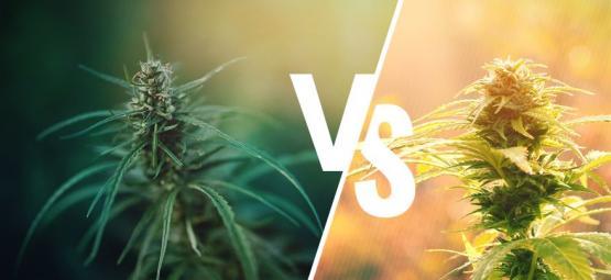 Was Ist Der Unterschied Zwischen Cannabis Und Hanf