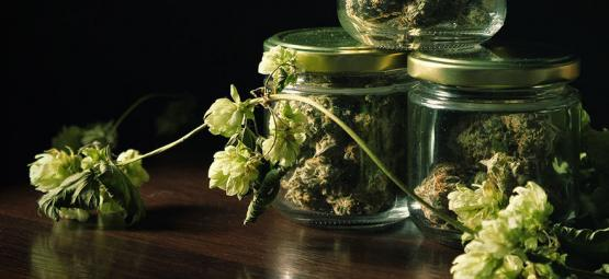 Die Überraschende Verbindung Von Marihuana Und Bier