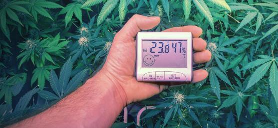 Die Perfekten Temperaturen Zum Anbauen Von Cannabis