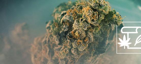 Was Ist Skunk Weed?