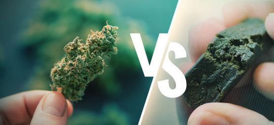 Der Unterschied Zwischen Cannabis Und Haschisch