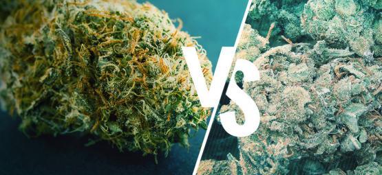 Gutes Vs Schlechtes Gras: Wie Man Den Unterschied Erkennt