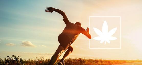 Wirkung Von Marihuana Auf Die Sportliche Leistung