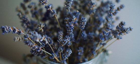 Kräuter, Die Man Mit Cannabis Mischen Kann