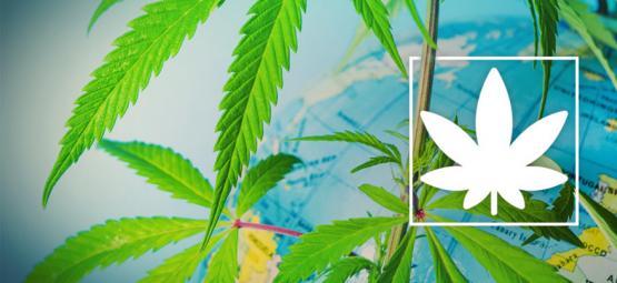 Wo Man In Europa Überall Legal Cannabis Rauchen Kann