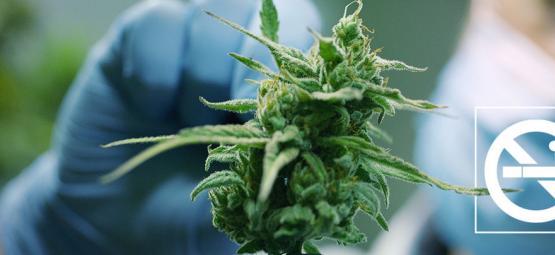 Wie Man Weed Nutzen Kann, Um Mit Dem Rauchen Aufzuhören