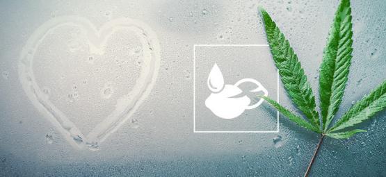 Die Besten Cannabissamen Für Feuchte Klimata
