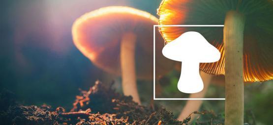 Wie Man Verschiedene Arten Von Zauberpilzen Erkennt