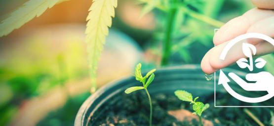 Die Verschiedenen Phasen Des Cannabisanbaus Und Warum Sie Wichtig Sind