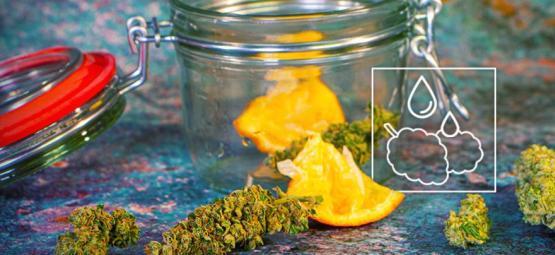 Wie Du Deine Ausgetrockneten Cannabisblüten Rehydrierst
