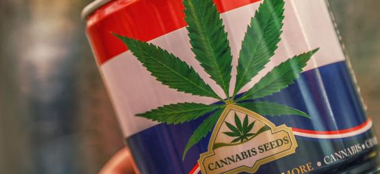 Nederwiet! Alles Über Niederländische Weed Und Die Top 3 Der dort erschaffenen Cannabissorten