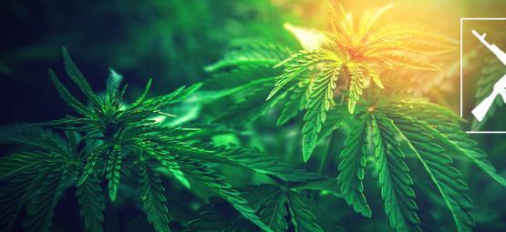 Die Top Der 3 AK-47 Cannabis Sorten: Wirkung Und Anbaueigenschaften