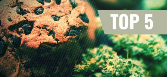 Die 5 besten Cannabis-Cookies Rezepte