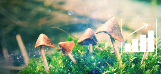 Züchte Magic Mushrooms mit unserem Zuchtset für draußen