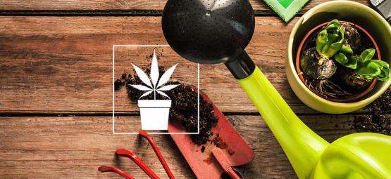 10 Unverzichtbare Werkzeuge Für Cannabisanbauer