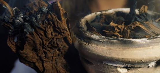 7 Heilige Pflanzen Aus Der Ganzen Welt