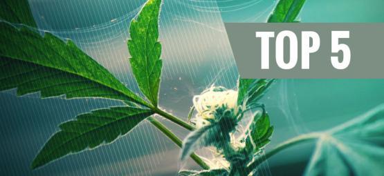 Die Top 5 Der Natürlichen Schädlingsbekämpfungsmittel Für Cannabis