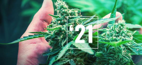 Die Besten Cannabissorten Für Das Jahr 2021