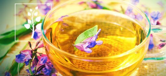 Wie Man Einen Tee Aus Salvia Divinorum Braut
