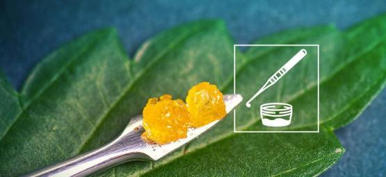 Live Resin-Cannabiskonzentrate Wissen Musst